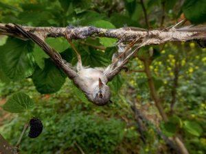 14-whitethroat-bird-africa-670