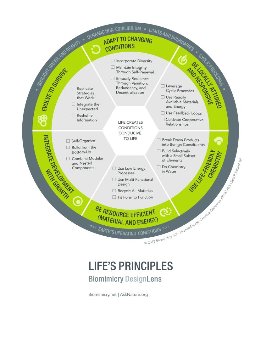 Biomimicry38_DesignLens_Lifes_Principles_PRINT