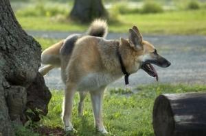 dog_peeing_klein-749915