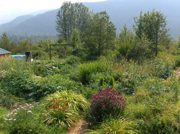 Permaculture polyculture