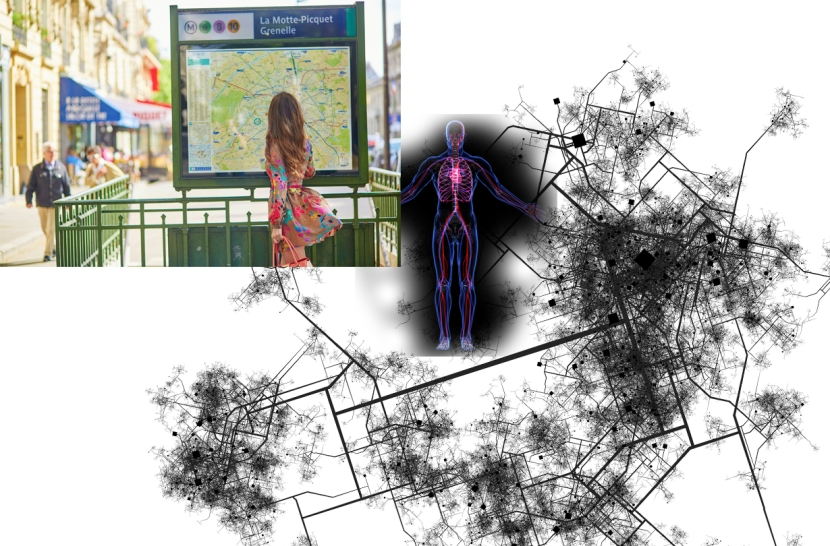Systems Networks Transportation Cardiovascular Circulatory