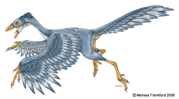 http://mmfrankford.deviantart.com/art/Archaeopteryx-Concept-94243934 https://creativecommons.org/licenses/by-nc-nd/3.0/