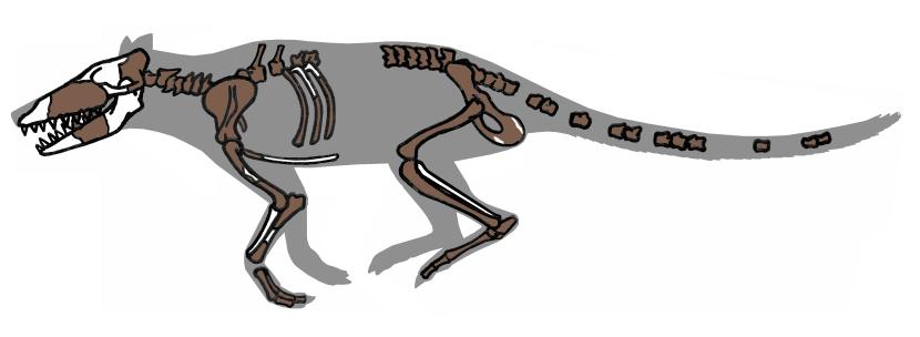 Pakicetus_fossil