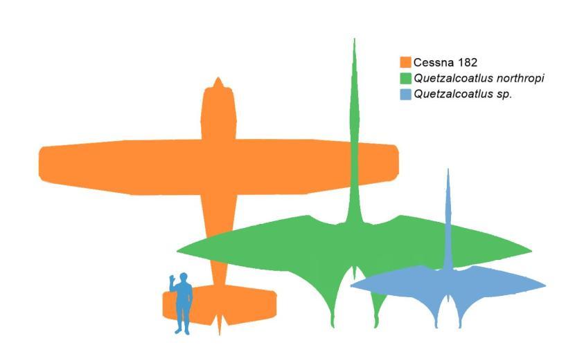 quetzalcoatlus vs cessna