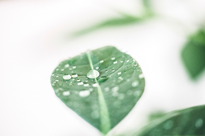drops-of-leaves-4-2